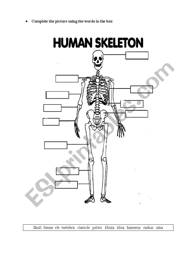 Worksheets Human Skeleton Worksheet human skeleton esl worksheet by josekaram worksheet