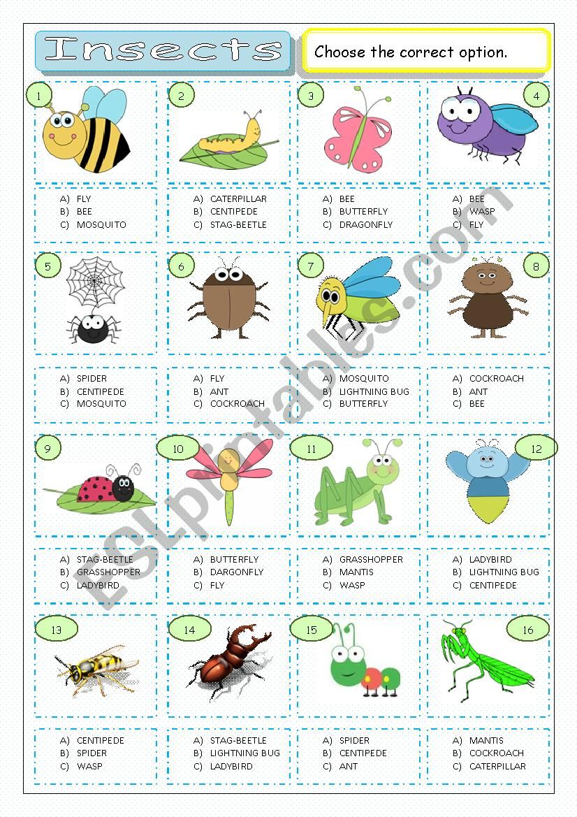 Insects - Multiple Coice worksheet