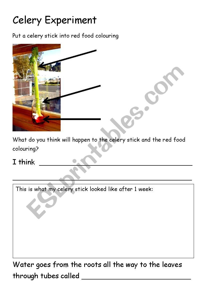 graphic about Celery Experiment Printable Worksheet identified as Celery Experiment Worksheet - ESL worksheet through kelleych