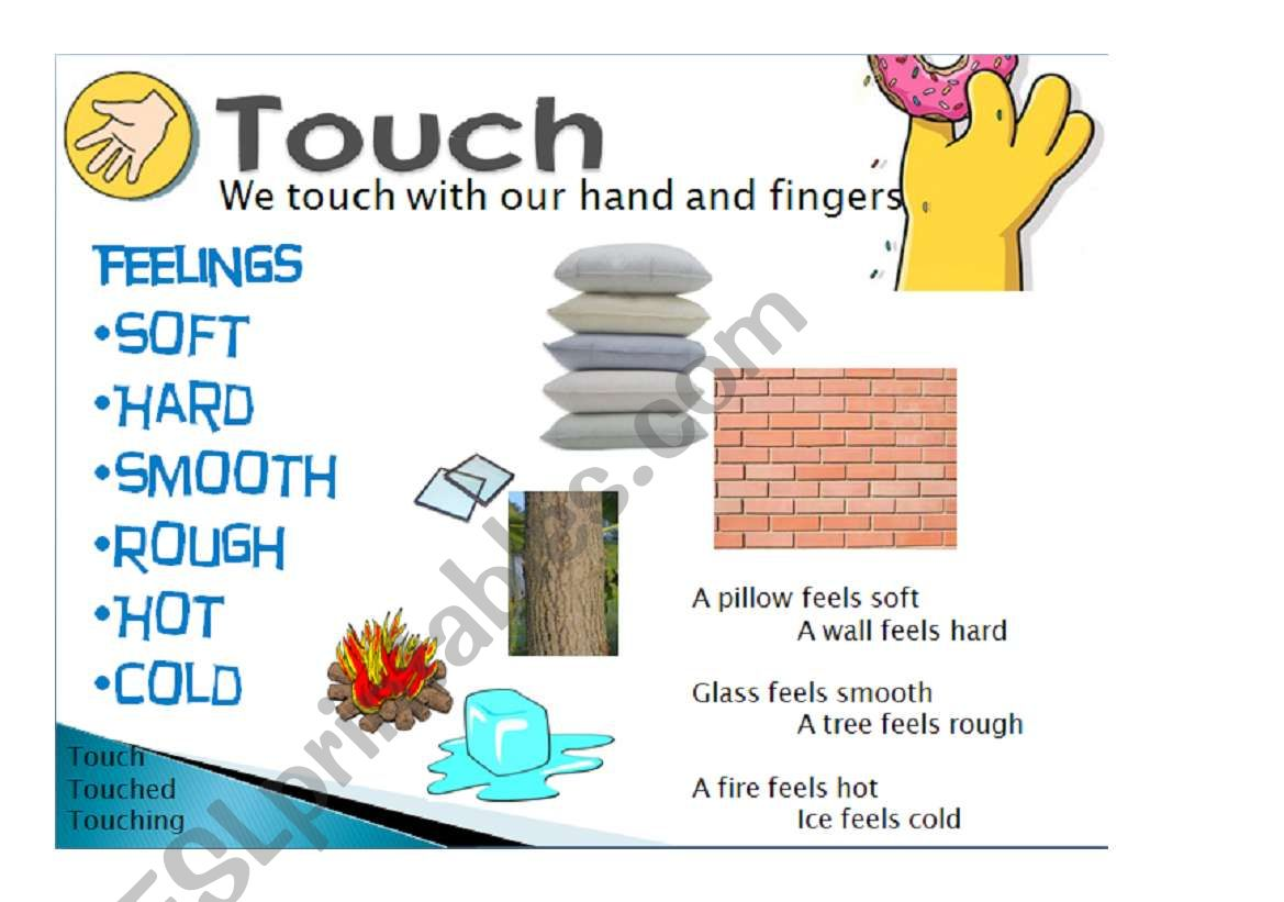 five senses, touch 5/5 worksheet