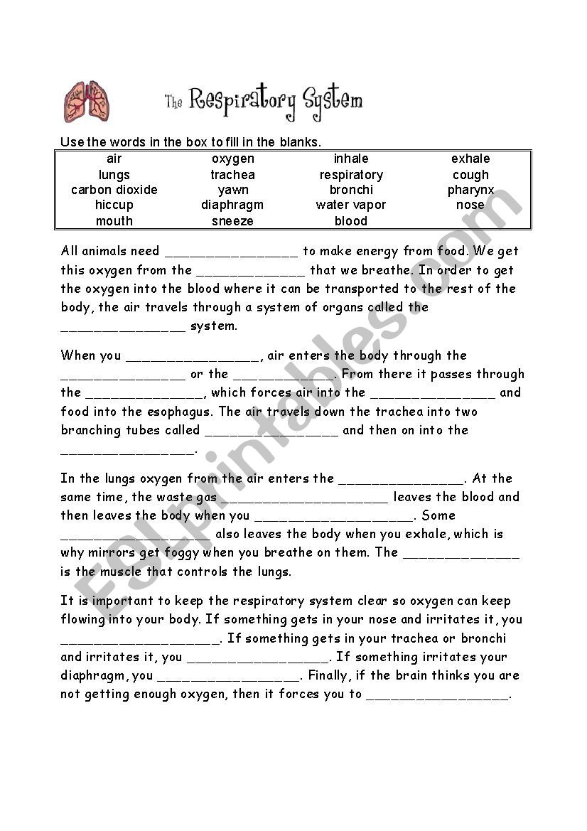 The respiratory system - ESL worksheet by Revisione With Regard To Respiratory System Worksheet Pdf