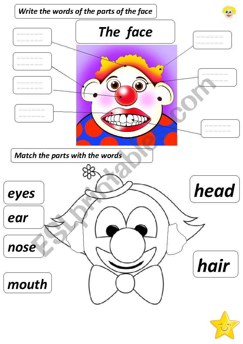the parts of the face worksheet