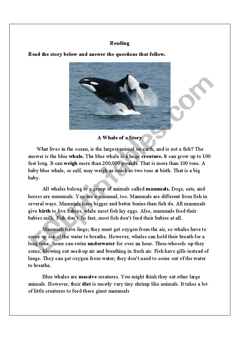 A Whale worksheet