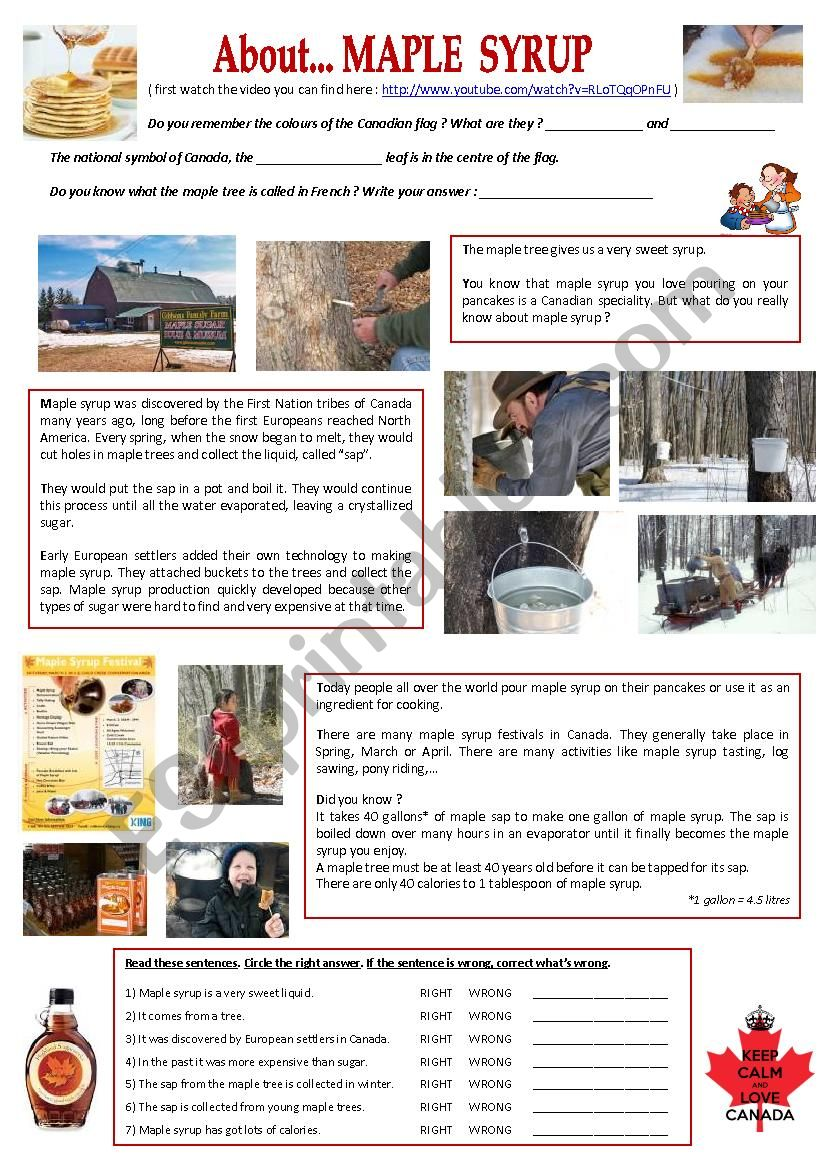 About... maple syrup worksheet