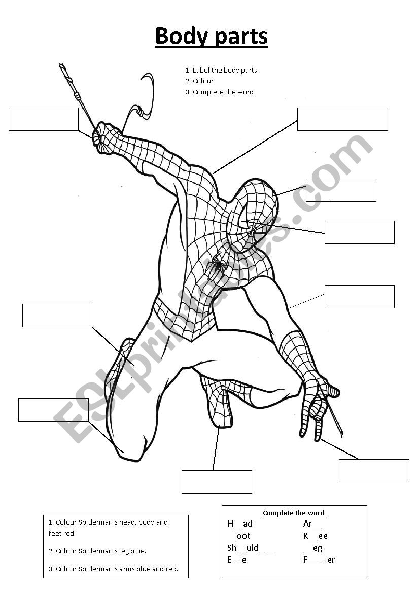 Spiderman body parts worksheet