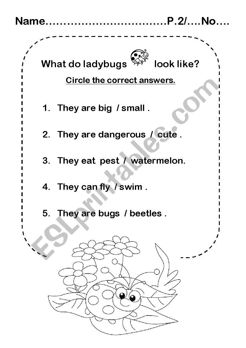 Ladybug worksheet