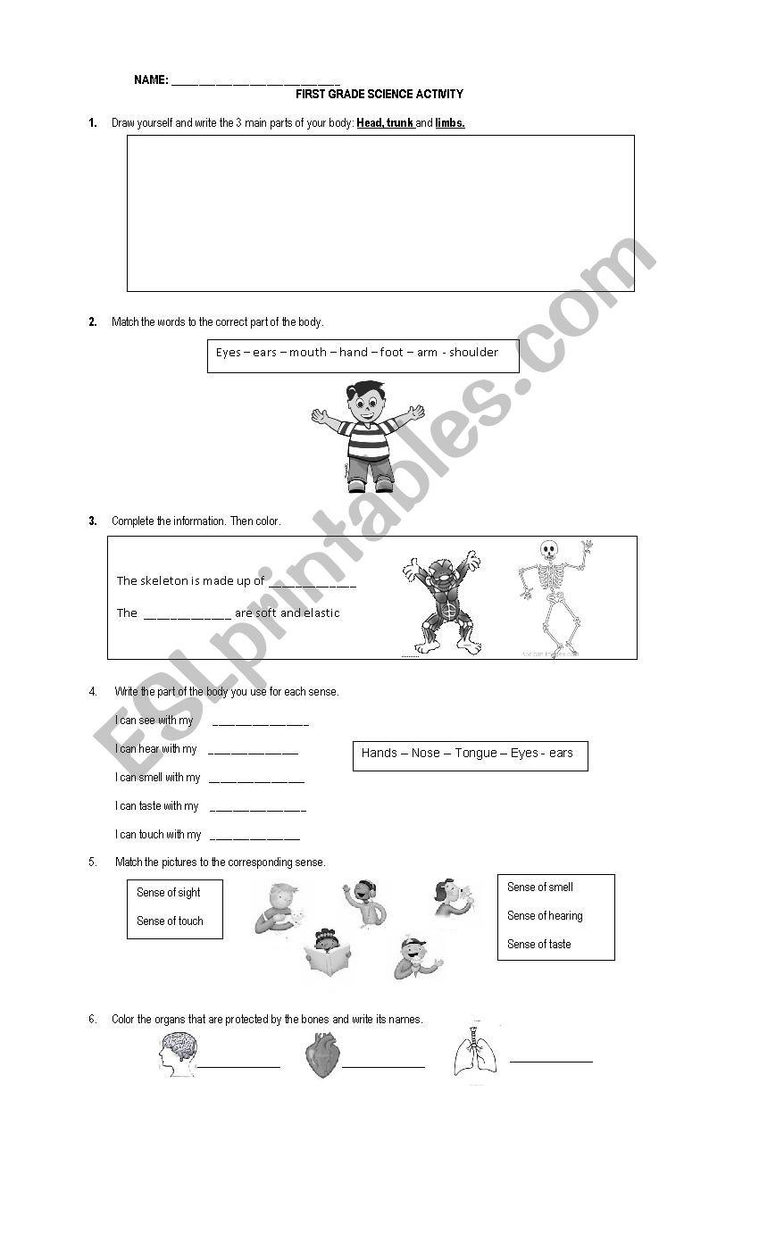 - FIRST GRADE SCIENCE WORKSHEET - ESL Worksheet By Anpamaji