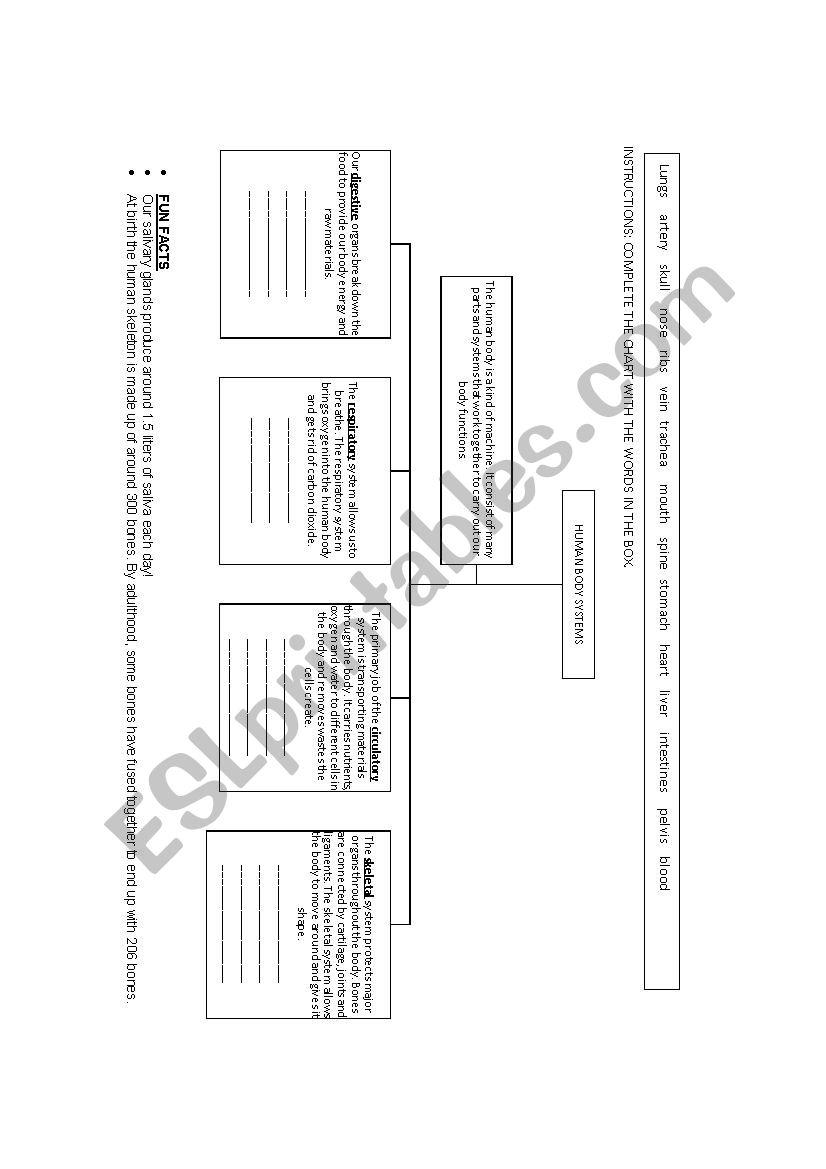 Body Systems Chart Esl Worksheet By Missfany
