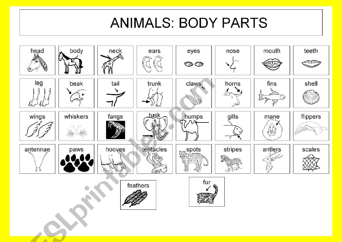 animals body parts esl worksheet by chedess. Black Bedroom Furniture Sets. Home Design Ideas