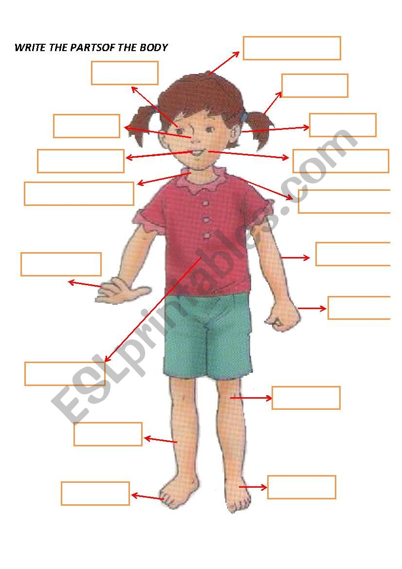 Parts Of The Body Esl Worksheet By Amoes2486