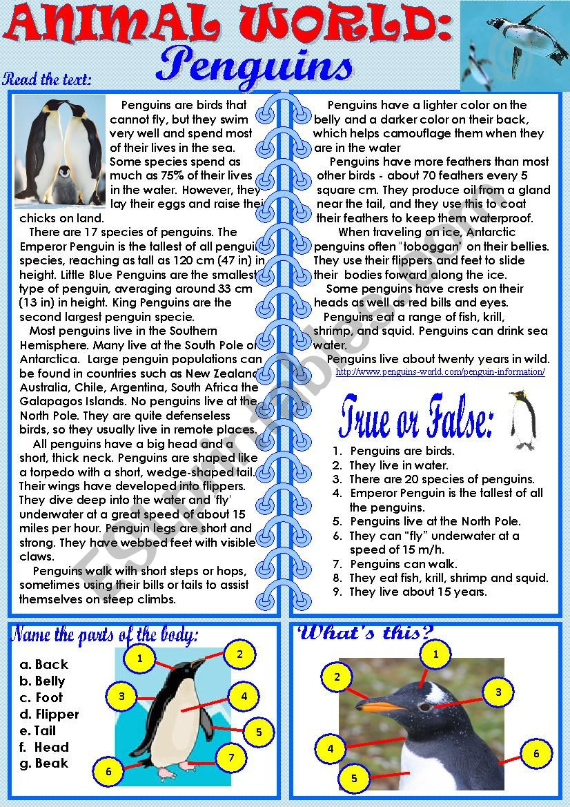 Animal World: Penguins worksheet