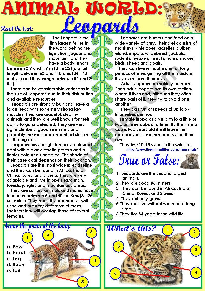 animal world leopards esl worksheet by tmk939. Black Bedroom Furniture Sets. Home Design Ideas