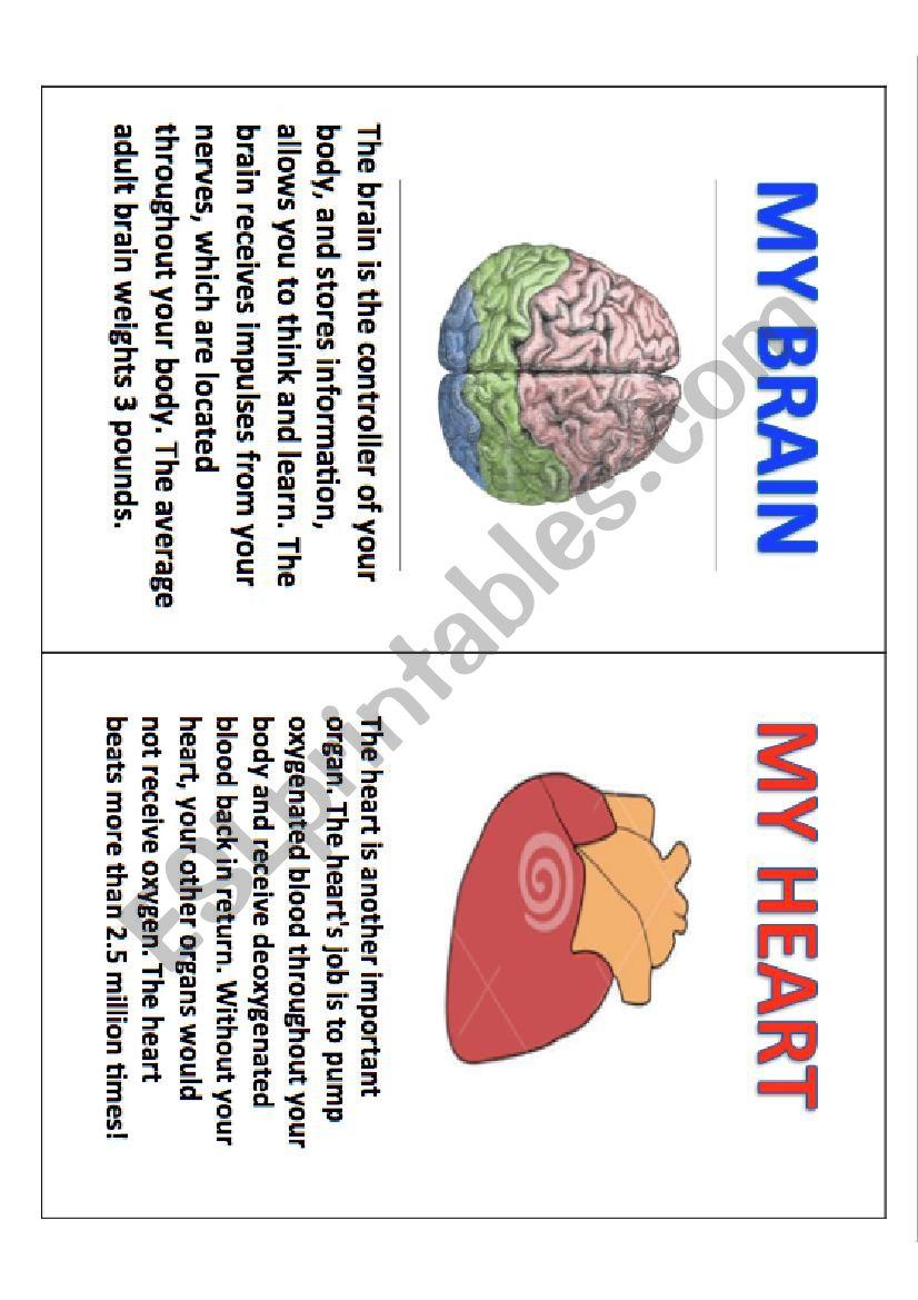 Internal parts of body book worksheet