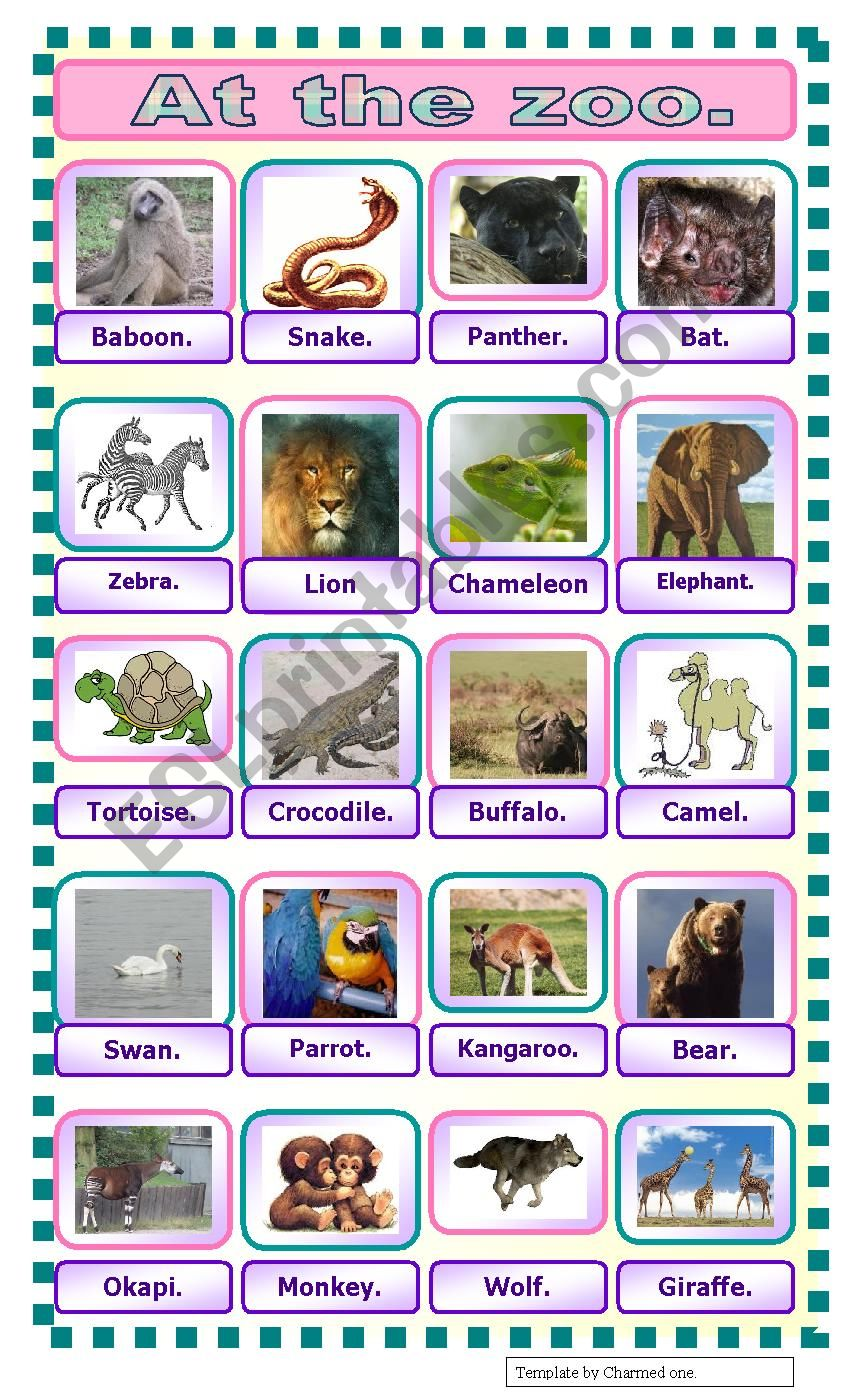 At the zoo: pictionnary. worksheet