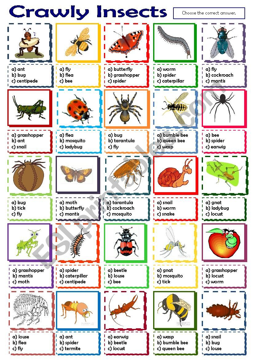 Crawly Insects worksheet