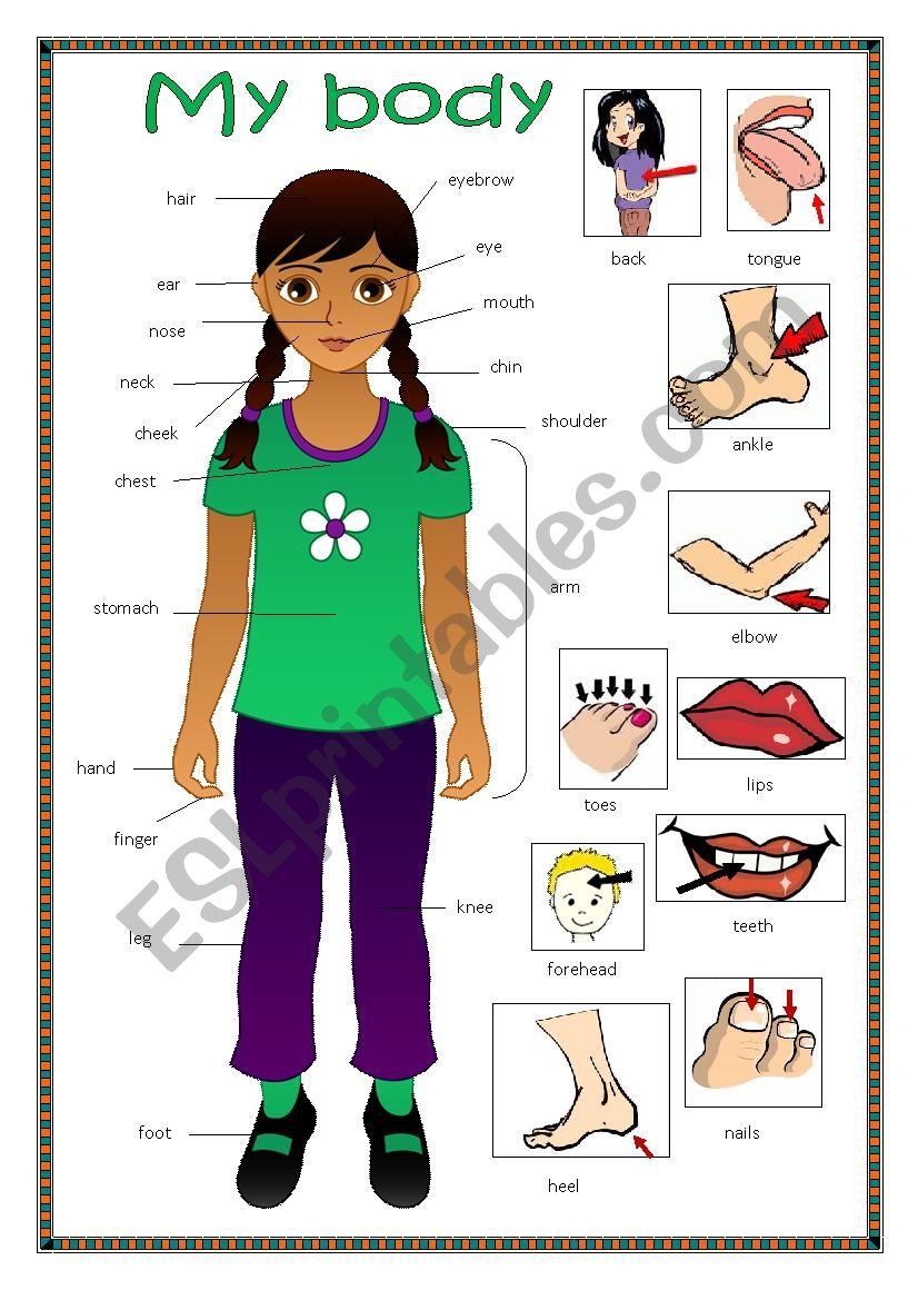 My body 2. worksheet