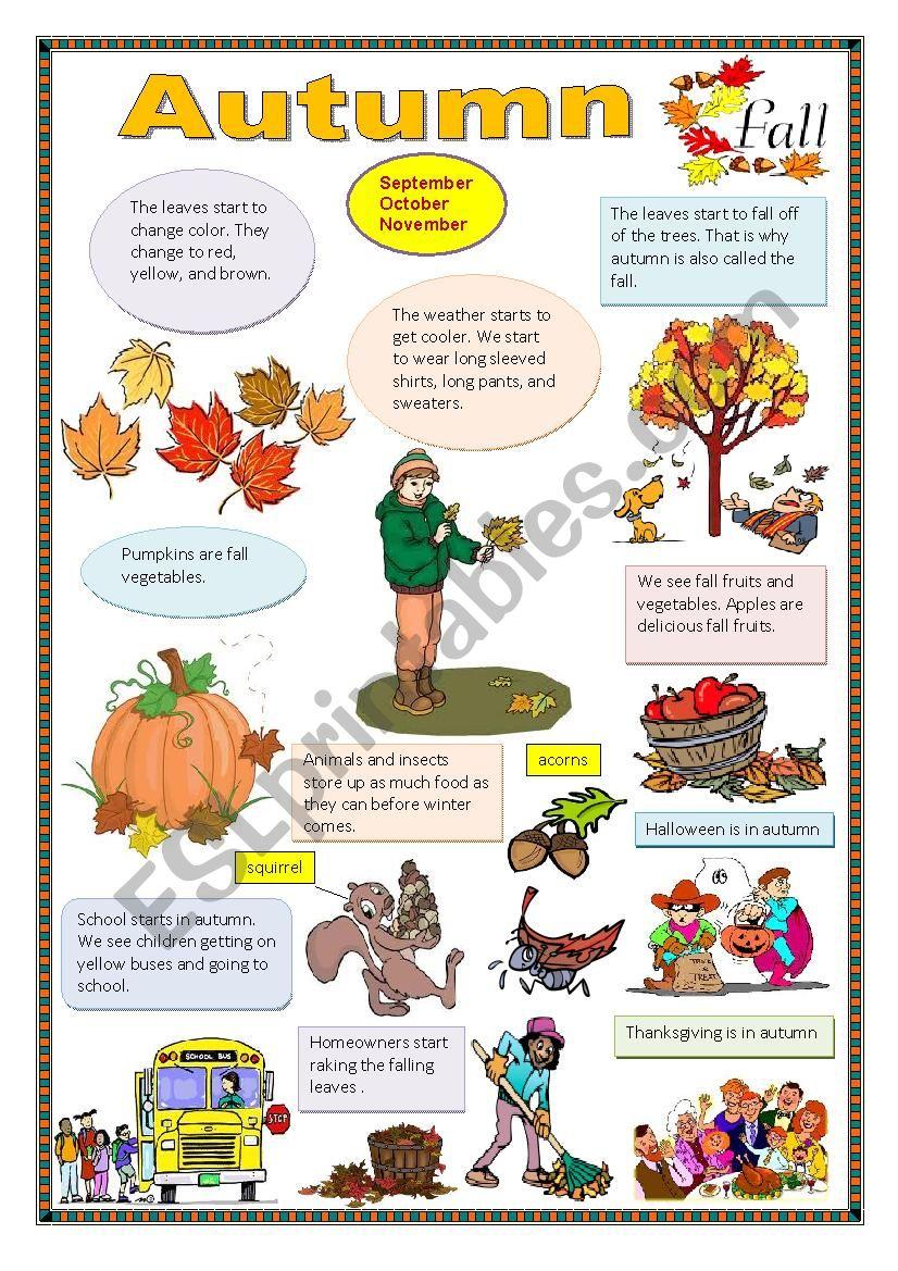 Autumn. worksheet