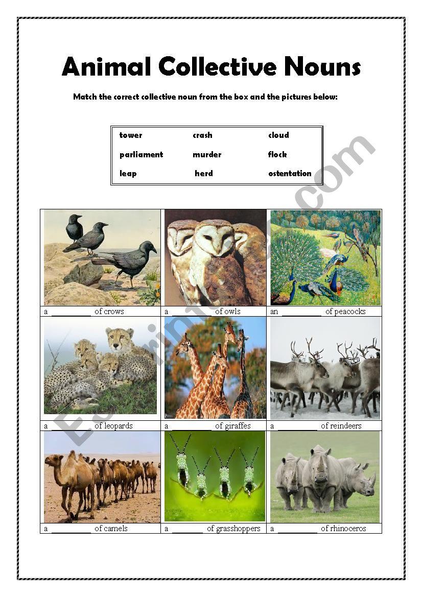Animal Collective Nouns(2) worksheet