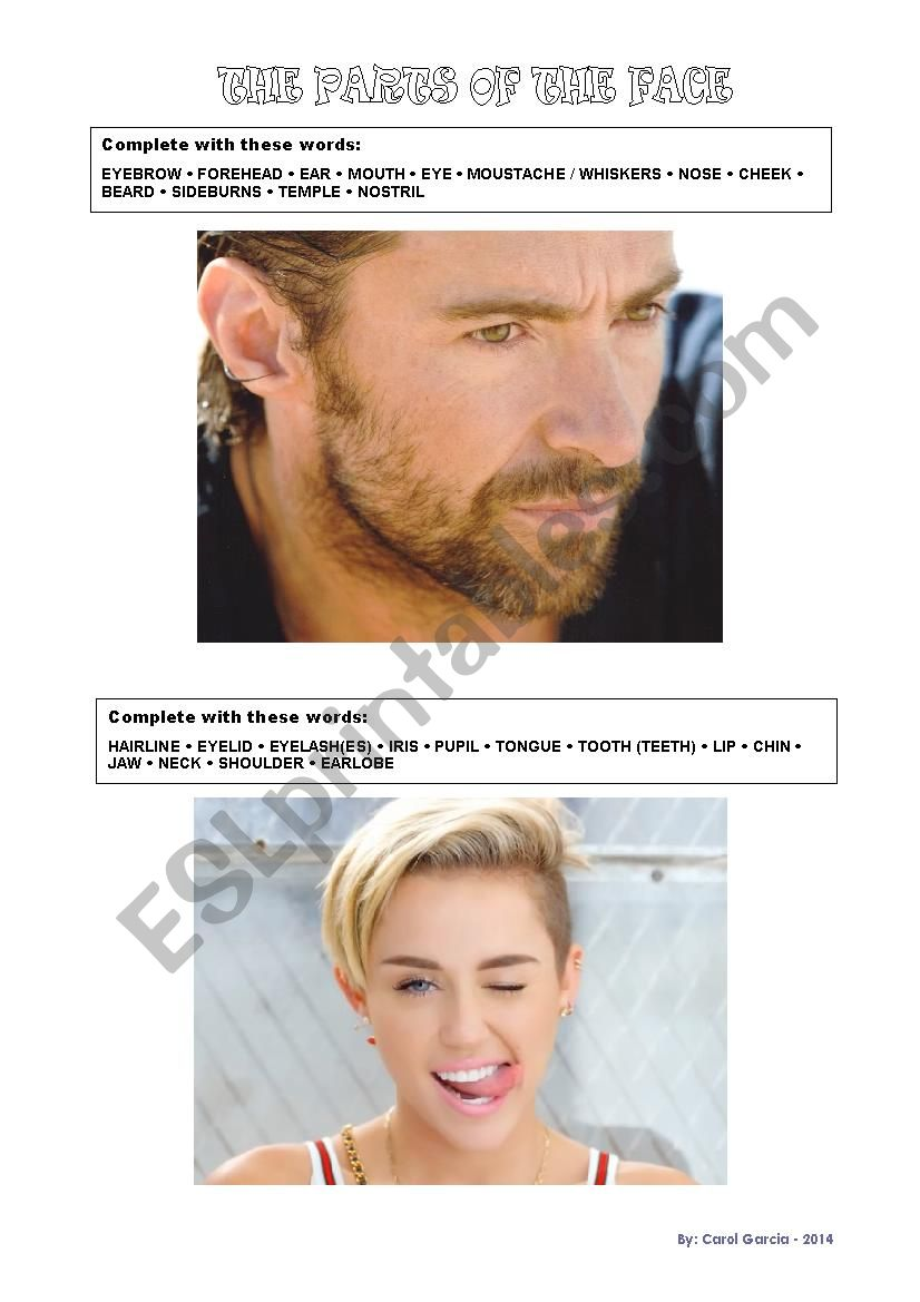 Parts of the HEAD - FACE worksheet