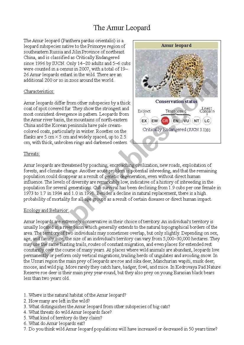 Amur Leopard Worksheet worksheet