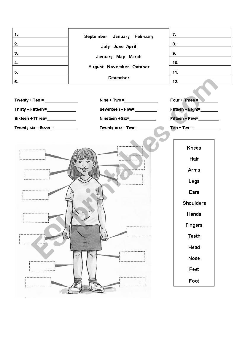 body parts worksheet