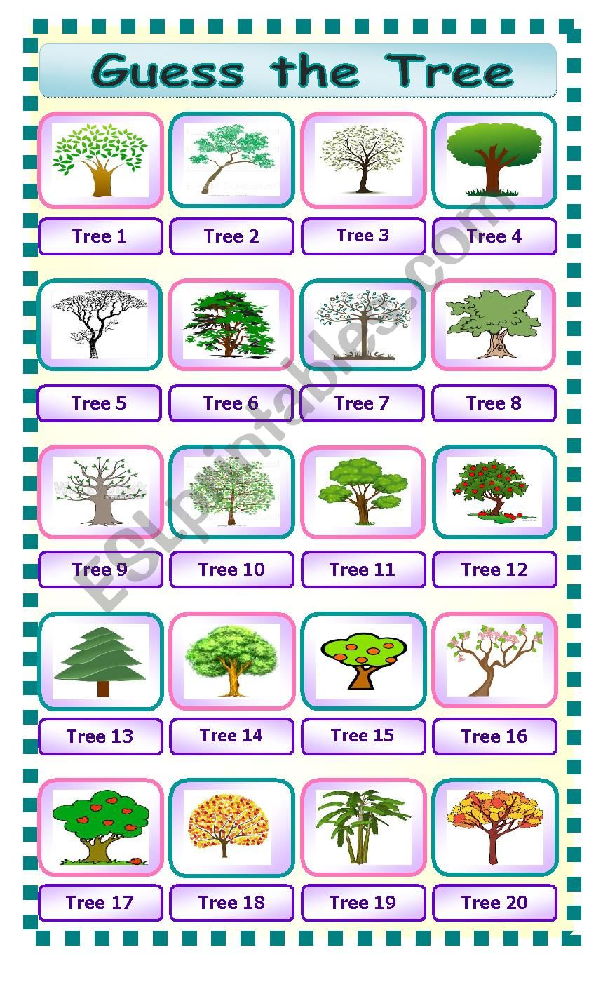 Guess the Tree worksheet