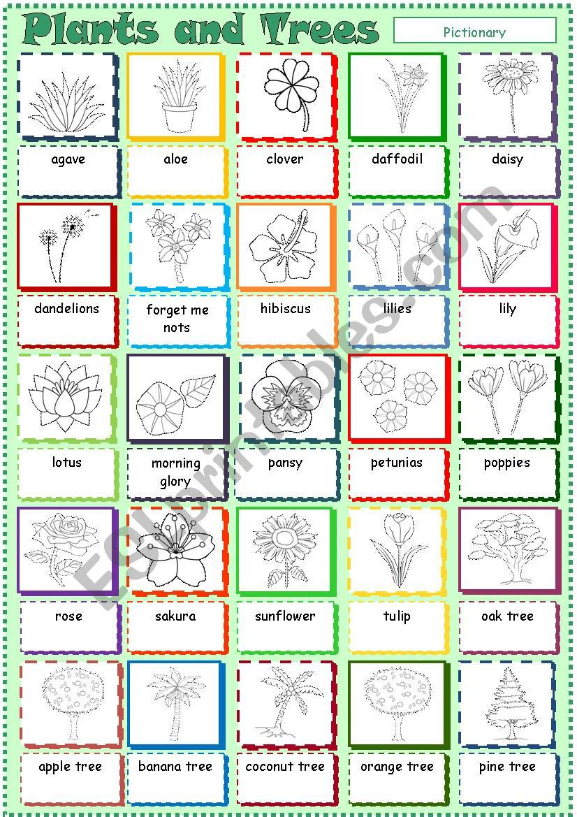 Plants, Flowers and Trees worksheet