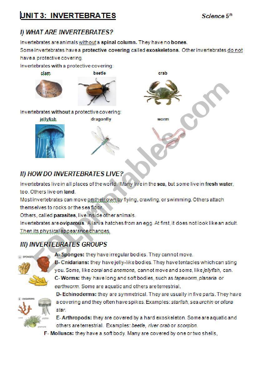 INVERTEBRATES worksheet