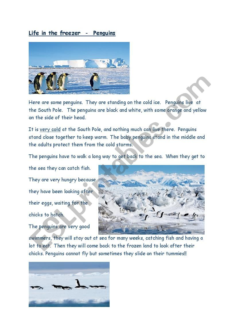 Reading/Comprehension task Penguins