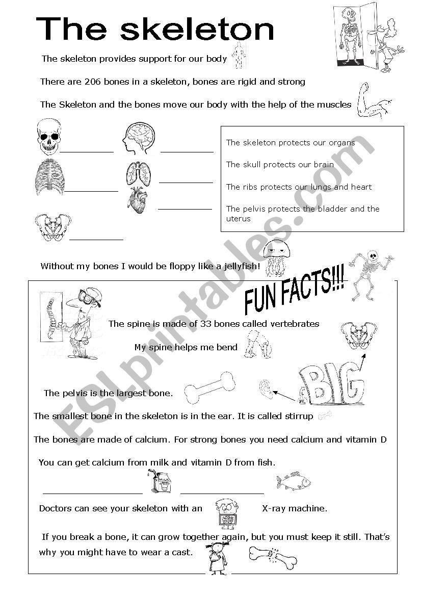 The skeleton worksheet