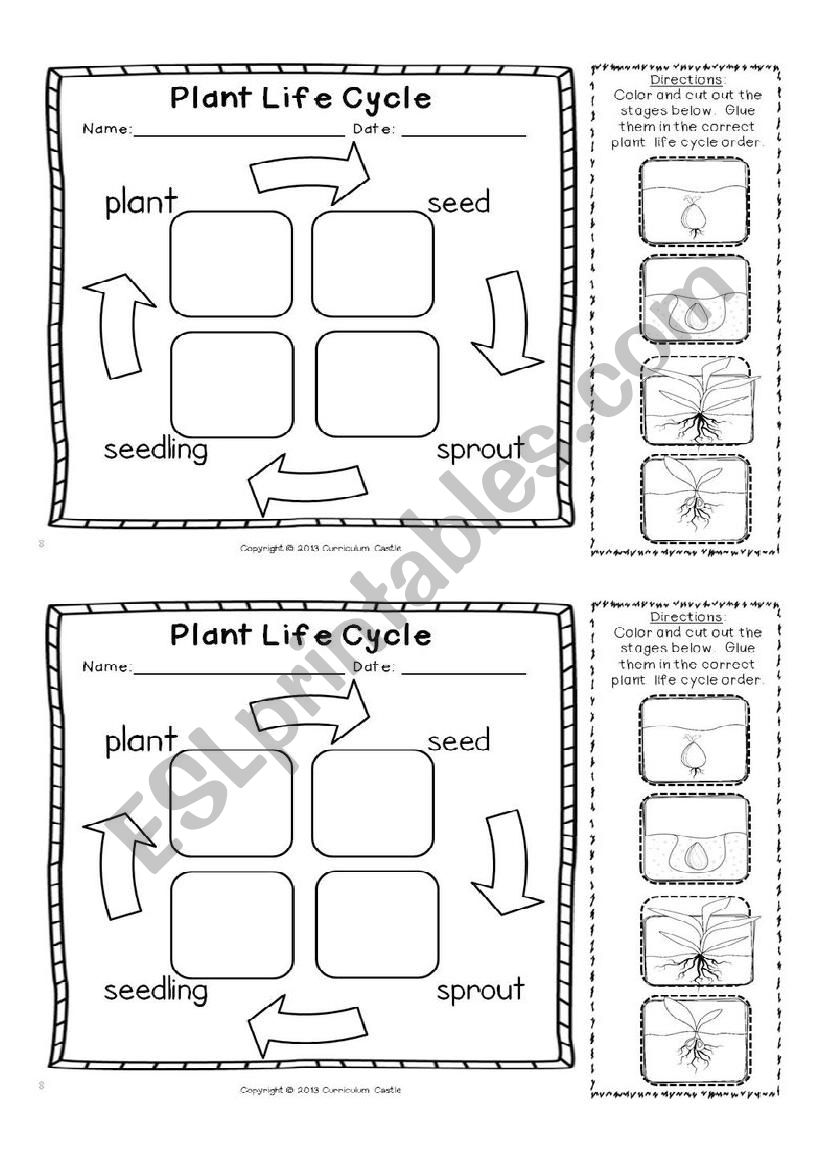 graphic regarding Plant Life Cycle Printable called Crops daily life cycle - ESL worksheet as a result of lluque