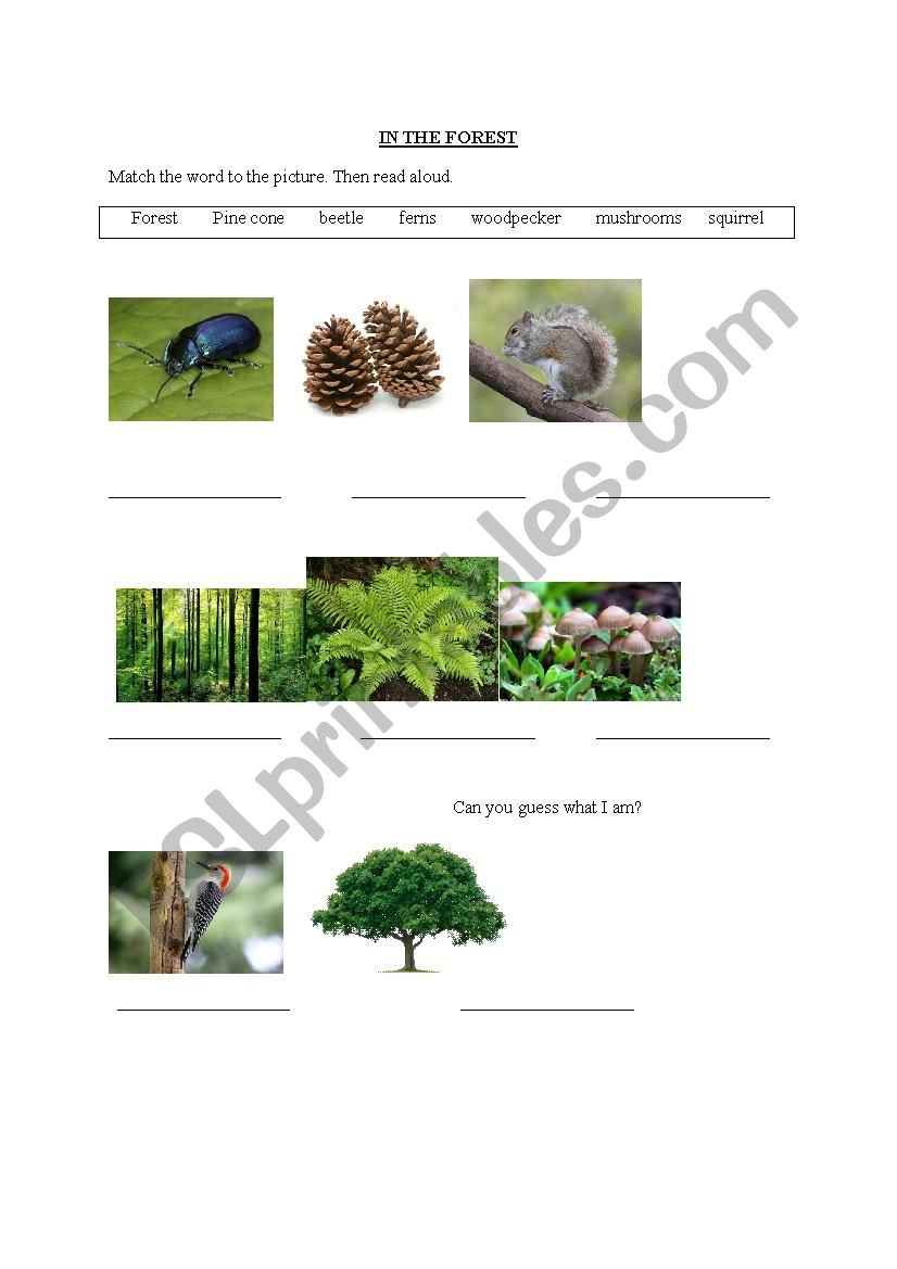 In The Forest worksheet