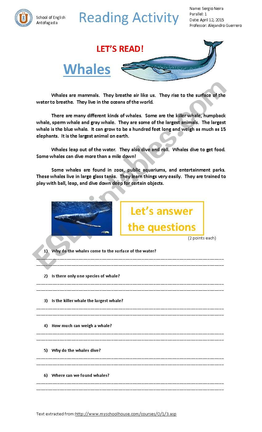 Whales - reading activity worksheet