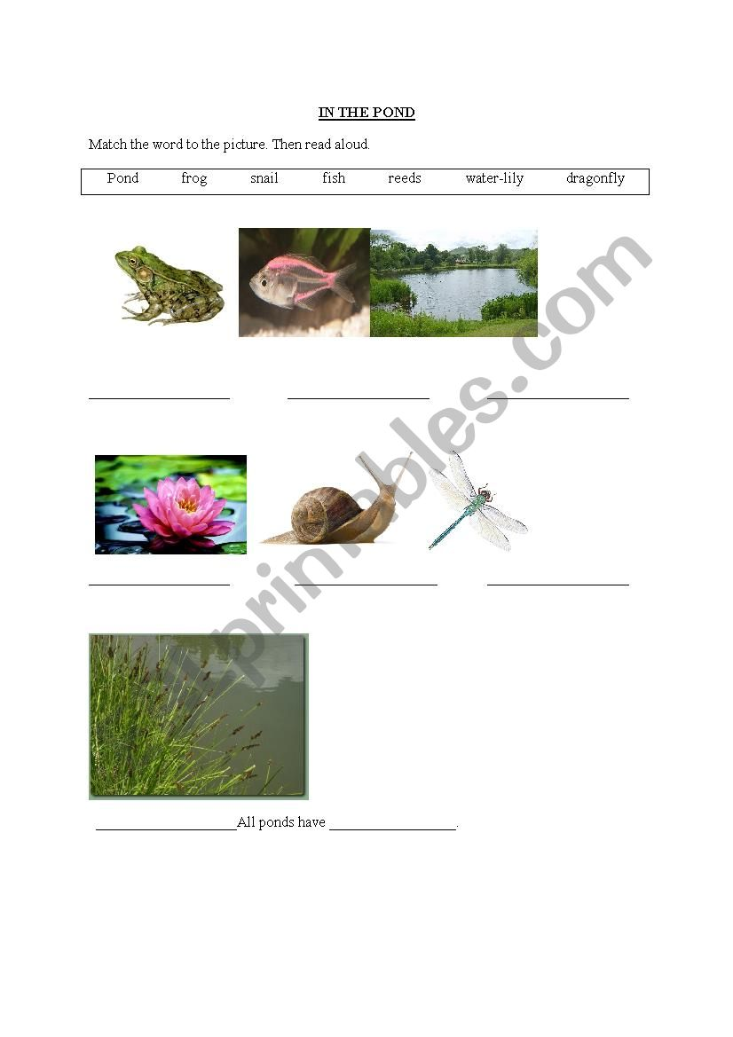 In The Pond worksheet