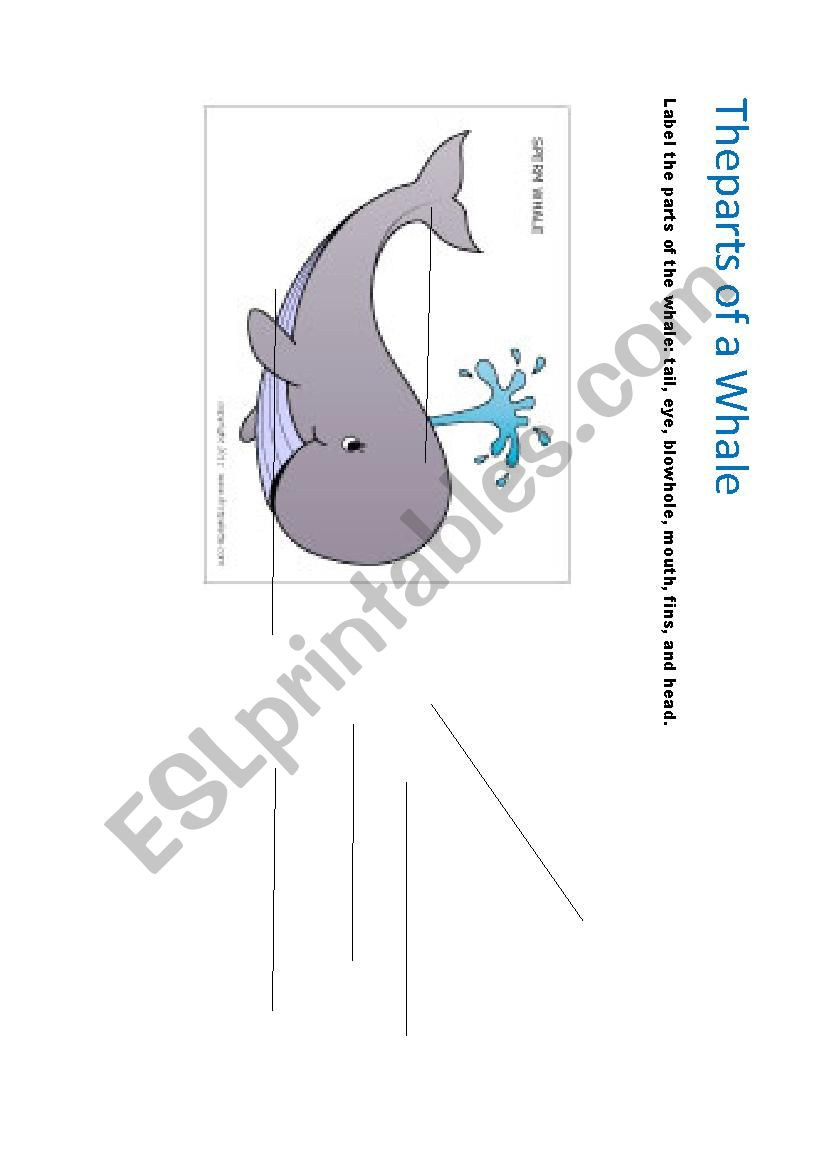 the parts of a whale - ESL worksheet by pages