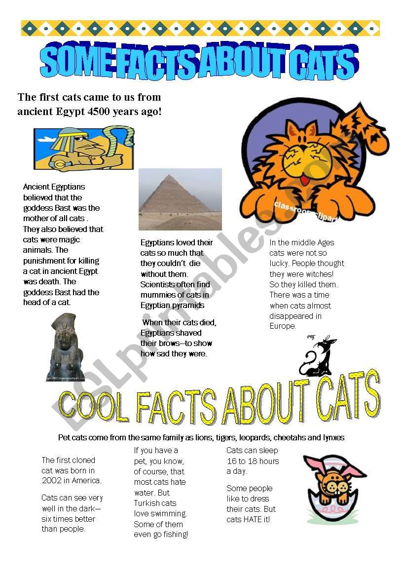 some facts about cats worksheet