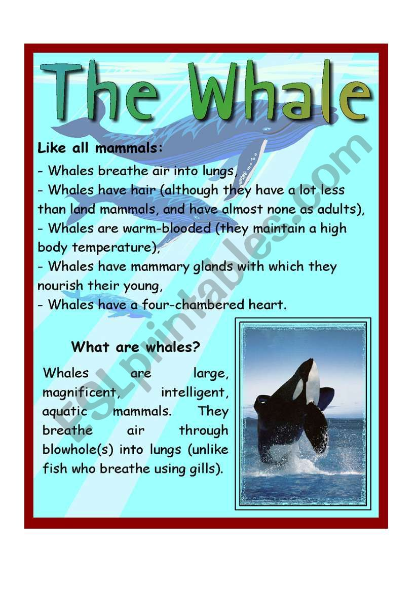 The Whale worksheet