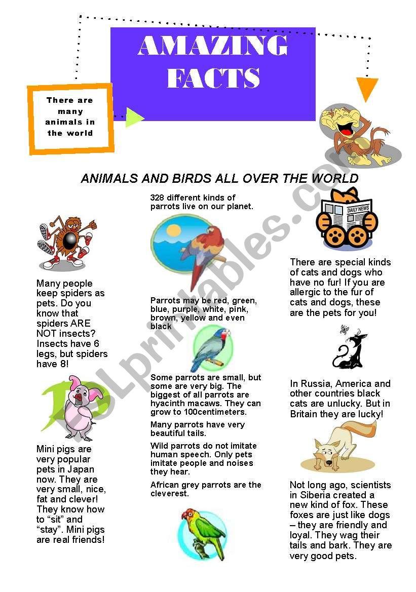 amazing facts worksheet