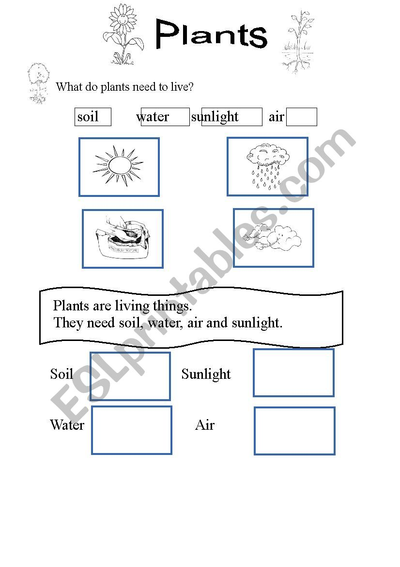 what do plants need to live plants 3 esl worksheet by spiderwoman321. Black Bedroom Furniture Sets. Home Design Ideas