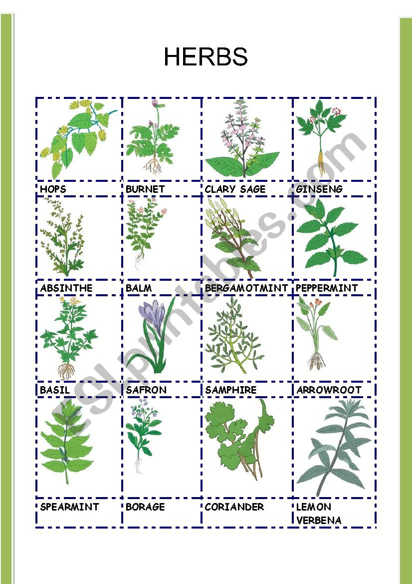 HERBS 2 worksheet