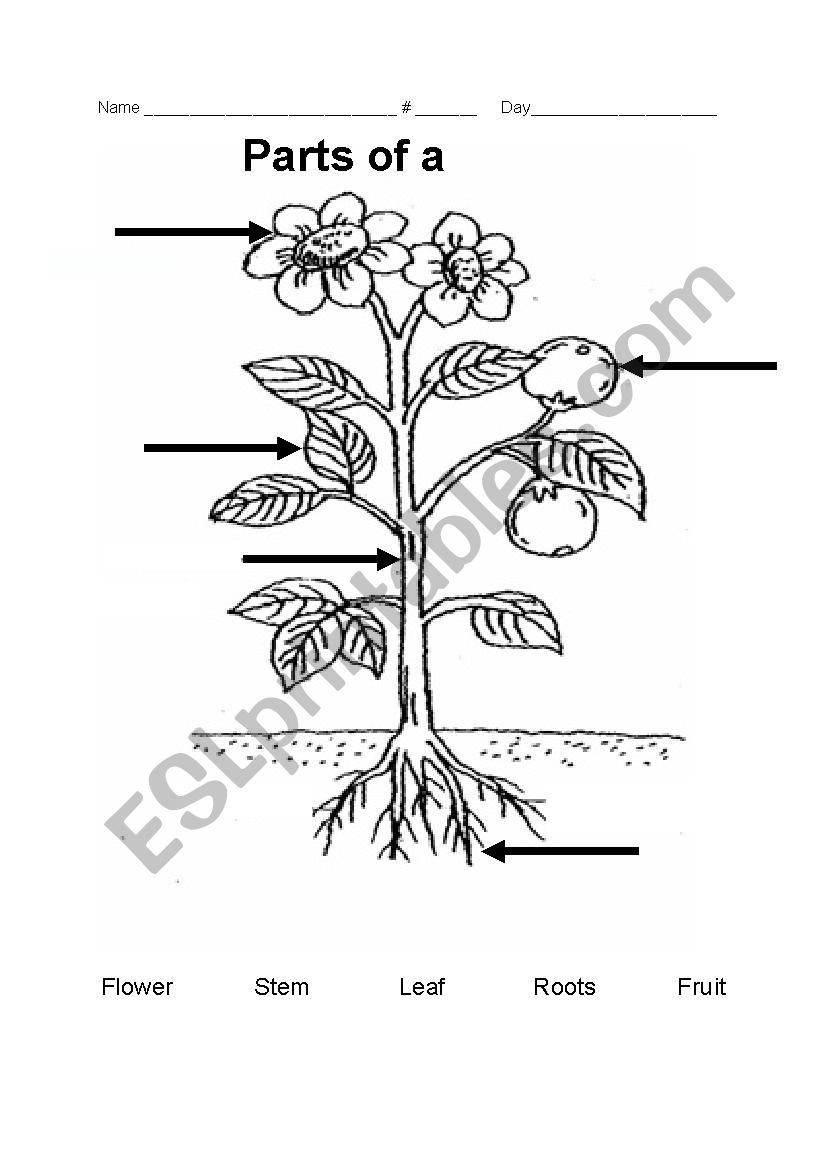parts of a plant esl worksheet by teacher rainbow. Black Bedroom Furniture Sets. Home Design Ideas