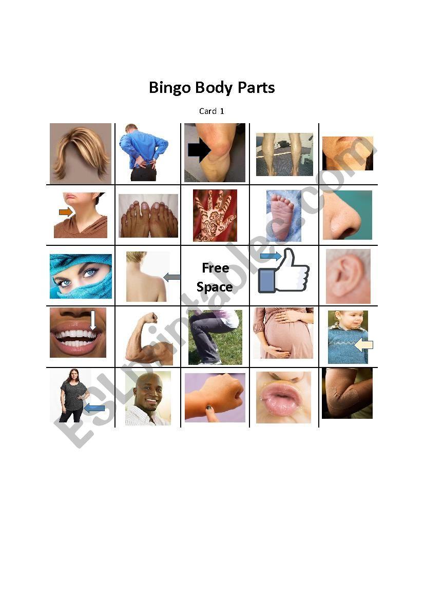Body Parts Bingo worksheet