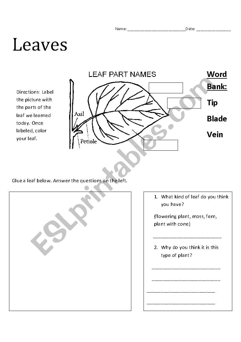 Leaf Part Identification (3rd Grade) - ESL worksheet by ...