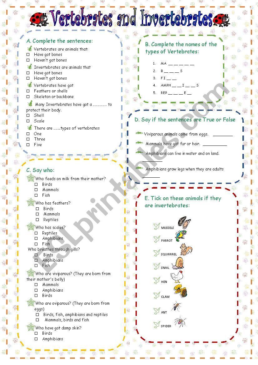 Vertebrates and Invertebrates worksheet