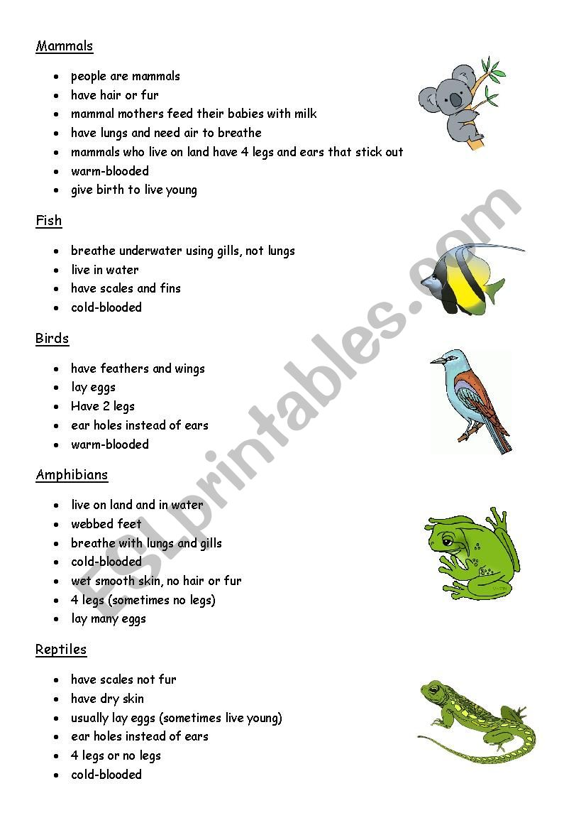 Classification of Animals. Text
