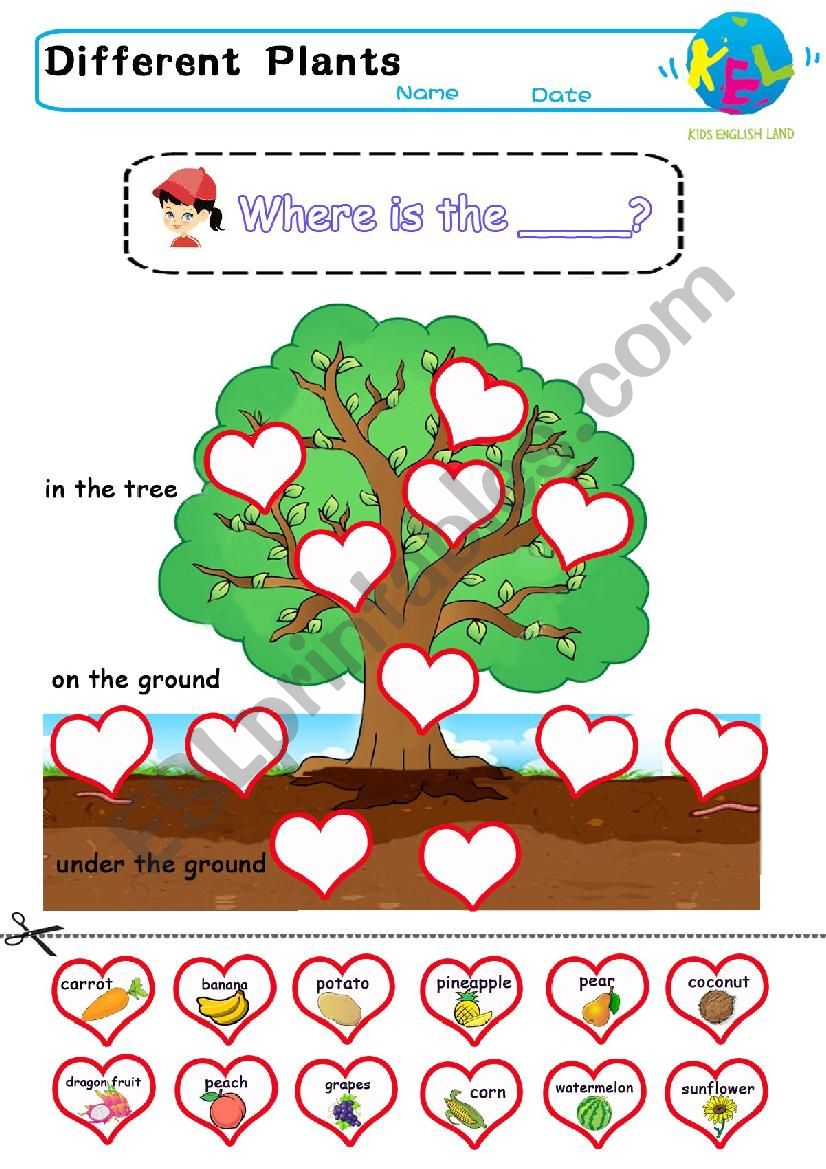 Where does the plant grow worksheet