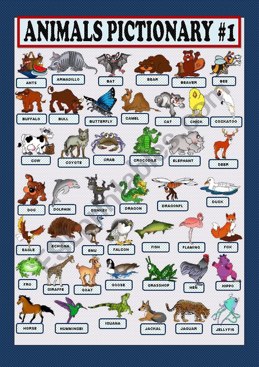 Animals pictionary part 1 worksheet