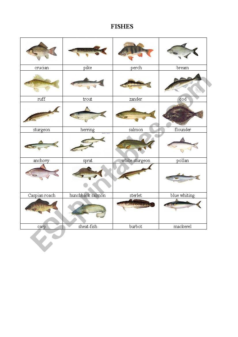 Fishes worksheet