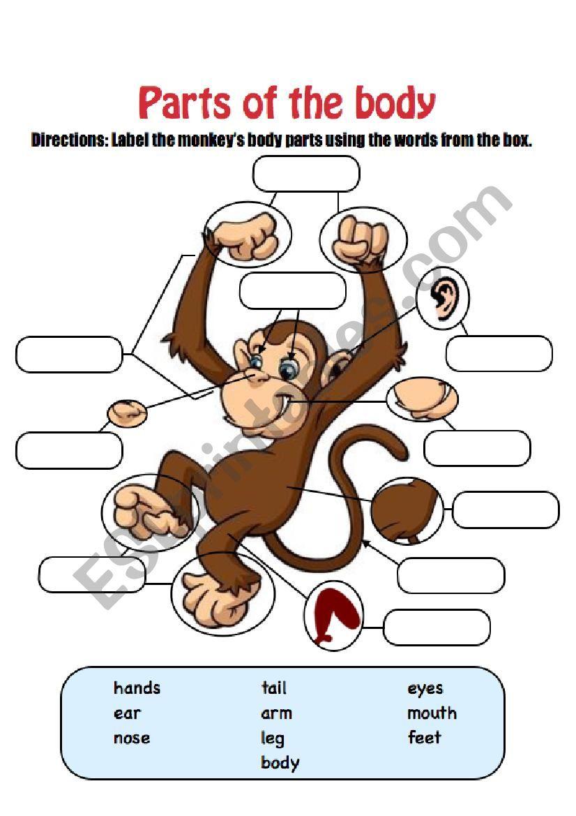 Monkey Body Parts worksheet