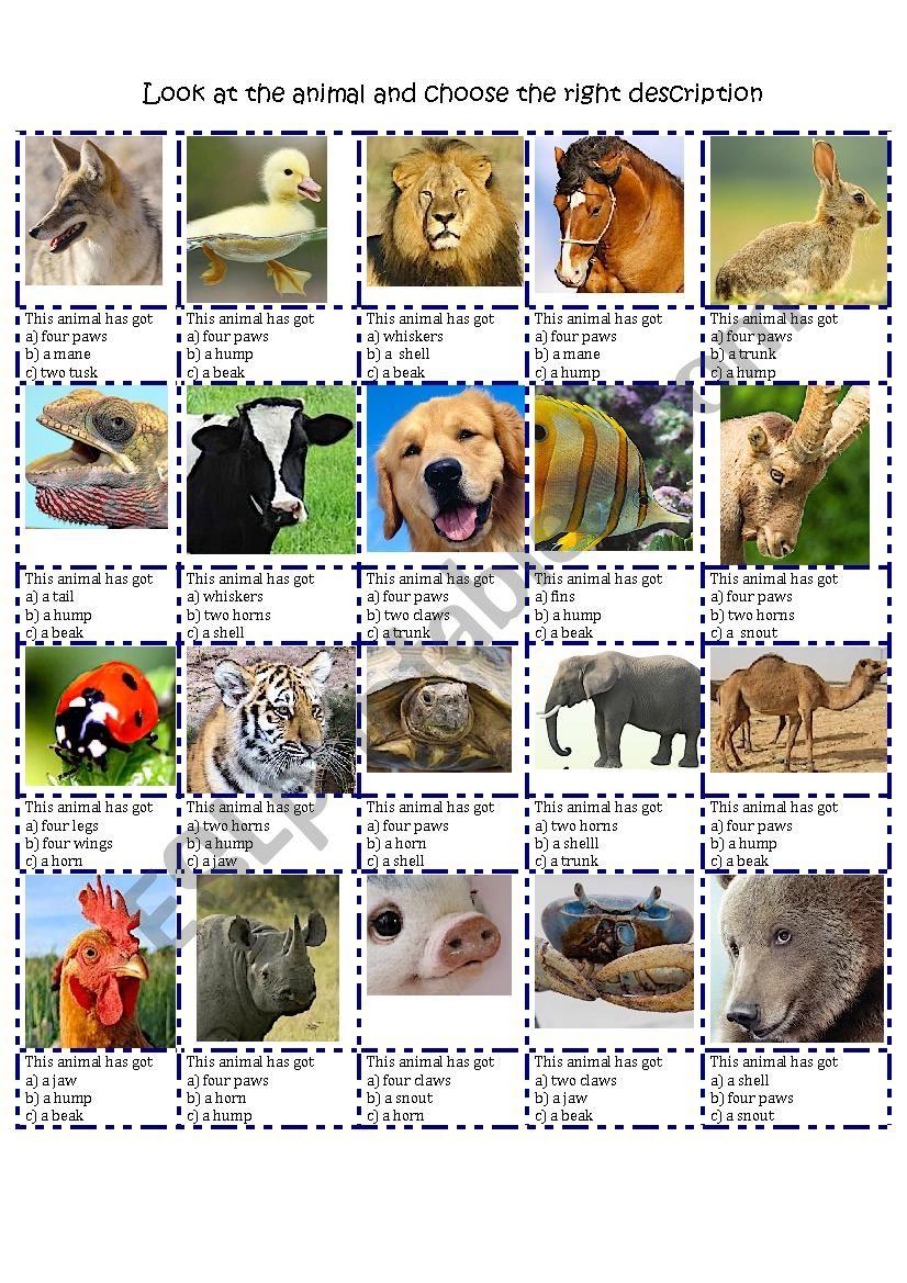 ANIMAL DESCRIPTION BODY PARTS MULTIPLE CHOICE